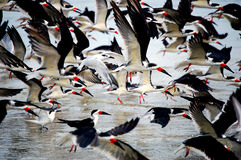 Vogels op het strand Stock Foto's