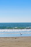 Vogels op het strand Royalty-vrije Stock Foto's