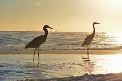 Vogels op het strand Stock Foto