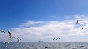 Vogels op het strand stock videobeelden