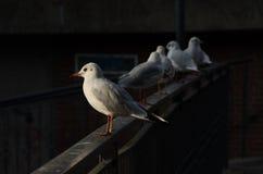 Vogels op het water royalty-vrije stock fotografie