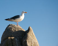 Vogels op het zand royalty-vrije stock foto's