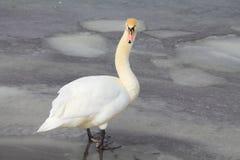 Vogels op ijs stock fotografie