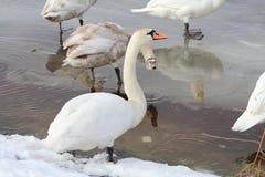 Vogels op ijs stock foto's