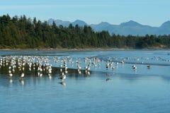 Vogels op lang strand Royalty-vrije Stock Foto