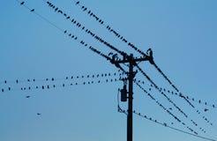 Vogels op machtslijnen Royalty-vrije Stock Foto's