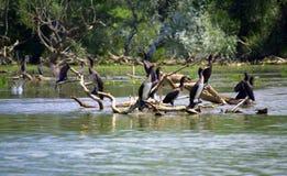 Vogels op meerbomen stock afbeelding