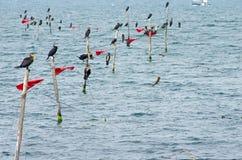 Vogels op netten in het overzees worden neergestreken die Royalty-vrije Stock Afbeeldingen