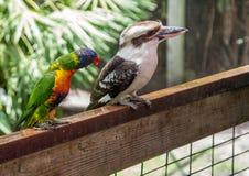 Vogels op omheining Royalty-vrije Stock Afbeelding