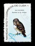Vogels op postzegels stock foto