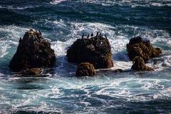 Vogels op seastacks op de Vreedzame Oceaan Royalty-vrije Stock Afbeelding