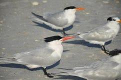 Vogels op Strand Stock Afbeeldingen