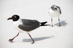 Vogels op strand Stock Fotografie