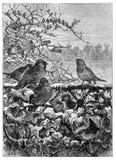 Vogels op struiken in de winter royalty-vrije illustratie
