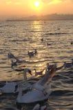 Vogels op zonsondergangoverzees royalty-vrije stock afbeelding