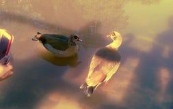 Vogels in openlucht stock illustratie