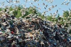 Vogels over de Stortplaats Stock Fotografie