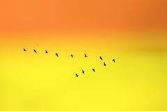 Vogels in schrijver uit de klassieke oudheid Royalty-vrije Stock Foto's