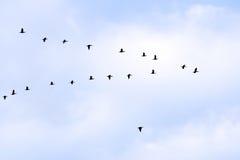 Vogels in schrijver uit de klassieke oudheid Stock Afbeelding