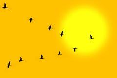 Vogels in schrijver uit de klassieke oudheid Stock Foto's