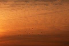 Vogels tegen oranje hemel Stock Foto