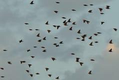 Vogels tijdens de vlucht Royalty-vrije Stock Foto's