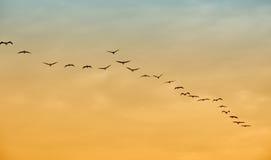 Vogels tijdens de vlucht Royalty-vrije Stock Afbeelding
