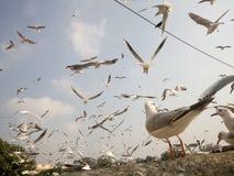 Vogels tijdens de vlucht Stock Foto