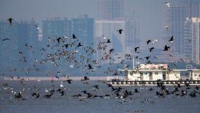 Vogels tijdens de vlucht bij grens van Hong Kong met stadsachtergrond stock afbeeldingen