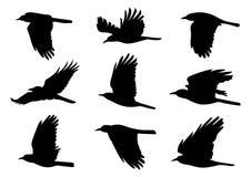 Vogels tijdens de vlucht - 9 Vectorillustraties Stock Afbeelding