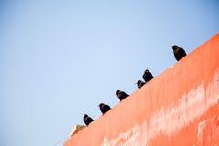 Vogels van de universiteit van Seda buddhish Royalty-vrije Stock Foto