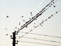Vogels van een draad en het vliegende vliegtuig Royalty-vrije Stock Afbeelding