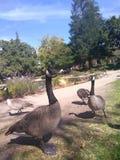 Vogels van een Veer royalty-vrije stock foto's
