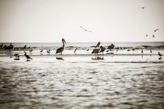 Vogels van een Veer stock afbeeldingen
