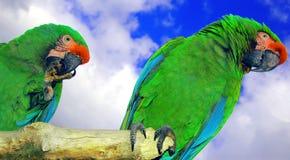 Vogels van een veer Stock Foto's