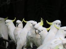 Vogels van een Veer Stock Afbeelding