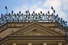 Vogels van een veerstok samen Stock Afbeeldingen