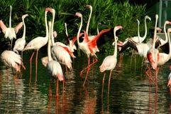 Vogels van onze wereld Stock Foto