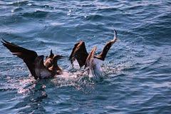 Vogels visserij Royalty-vrije Stock Fotografie