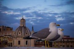 Vogels voor de kerk en de blauwe hemel met wolken op achtergrond Stock Afbeelding