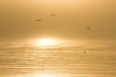 Vogels in water bij dageraad Stock Foto