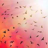 Vogels, zeemeeuwen zwart silhouet op roze stock illustratie