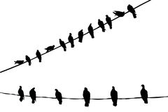 Vogels in Zuivere Zwart-wit Stock Afbeeldingen