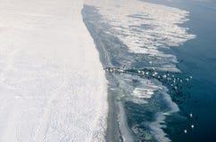 vogels Zwanen en eenden in de bevroren rivier van Donau Stock Foto's