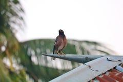 Vogelsbovenkant op dorpshuis royalty-vrije stock foto's