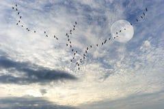 Vogelschattenbild Lizenzfreies Stockbild