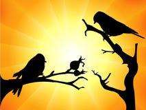 Vogelschattenbilder Stockbilder