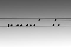 Vogelschattenbilder Lizenzfreies Stockfoto