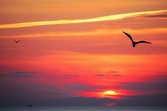 Vogelschattenbilder bei Sonnenuntergang Lizenzfreies Stockfoto