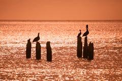 Vogelschattenbilder gegen das Meer Stockbild